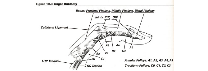injury-a2-finger-anatomy-1