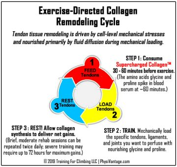 exercise-directed collagen supplementation for athletes
